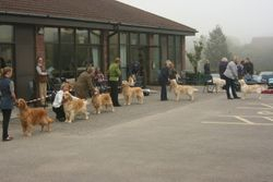 All the Dog Class Winners