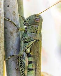 Cicada by Marilyn Lamoreaux (AC)