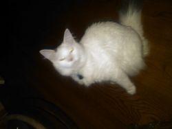 Tye disguised as a marshmellow kitty.