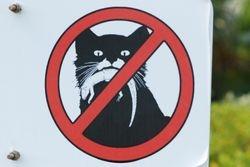 No cats allowed ashore!