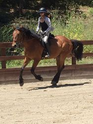 Canter June 2015