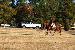 Theo's first Training event, dressage of 37.6