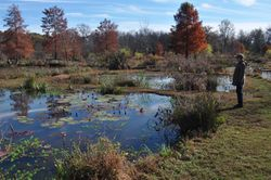 Aquatic Gardens, Autumn 2015