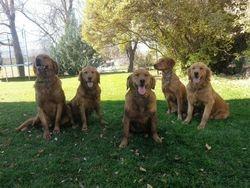 Rusty, Strawberry, Lady, Roux, & Alice