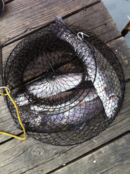 Trout Basket