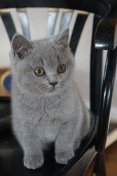 Meissie op de stoel
