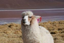 Altiplano, Bolivia 30