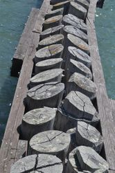 Pier Detaill,  Fisherman's Wharf