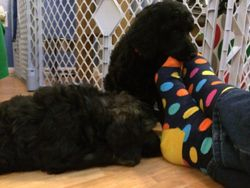 Debbie visited today.  Blue and Orange were fascinated with her spotted socks!  40 days.