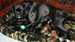Olive with Opie litter