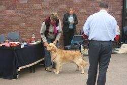 Novice Dog Amberland Ariley