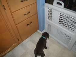 Teal & the baby gate