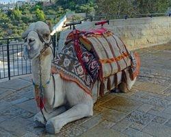 Camel Pose