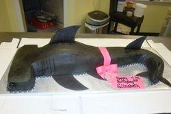hammer head shark cake 40 servings $280