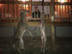 2 deer Youth gun