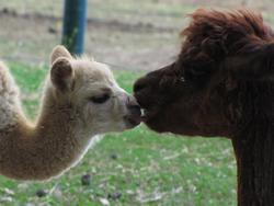Kisses 6