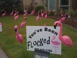 Flocking for Fun