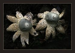 Fungi 9
