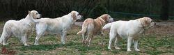 Lucy, Izzy, & Daisy