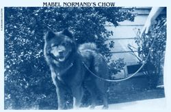 MABEL NORMAND'S CHOW