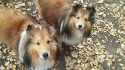 Duke & Sadie