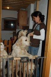 Susanne og hundene hennes.. Hun har ni Golden retrivere.