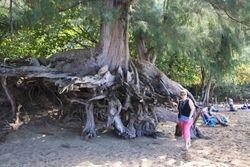 Tree on North Shore Beach - Haena State Park