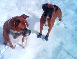 Tess in the snow  with her big sister :)