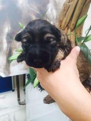 Sophie & Reece's pup