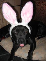 Easter Bunny Diva