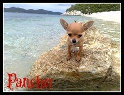 Pancho-Princess and Toque's