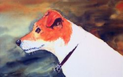 Jake the Jack Russell Terrier