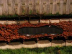 After - Pond Re-start