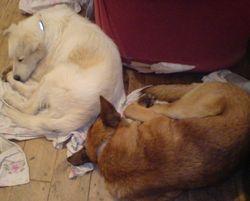 BigDog and his girlfriend Misty