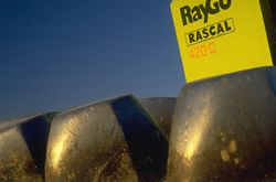 Rayco Rascal Road Compactor