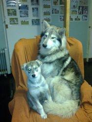 Shaman & Son