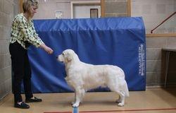 Class 4 No.61 Junior Dog