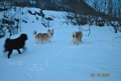 Egon, Andrine og Simba