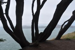 Land's End Tree
