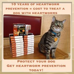 Happy--Heartworm Prevention Specialist