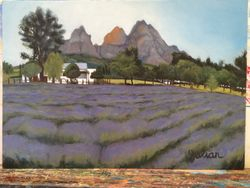 Boschendal Lavender Field