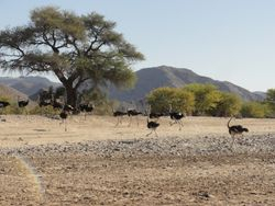 some of the locals. was also 3 troops of baboons, springbok and giraffe