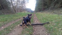 Another stick I have my eye on