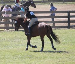 Bashful Bandit BN @ Full Gallop Farm Schooling HT