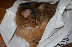 Guillet har funnet seg en pose å ligge i -08