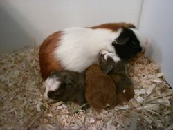 Nile with her bran new babies