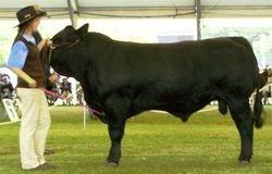 M-D Bull Dozer E421 - 1st place