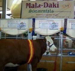 Mala-Daki Dreama
