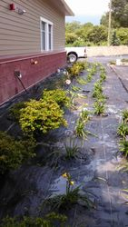 Planting with Weed Barrier
