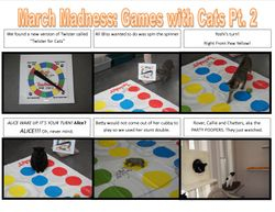Twister for Cats